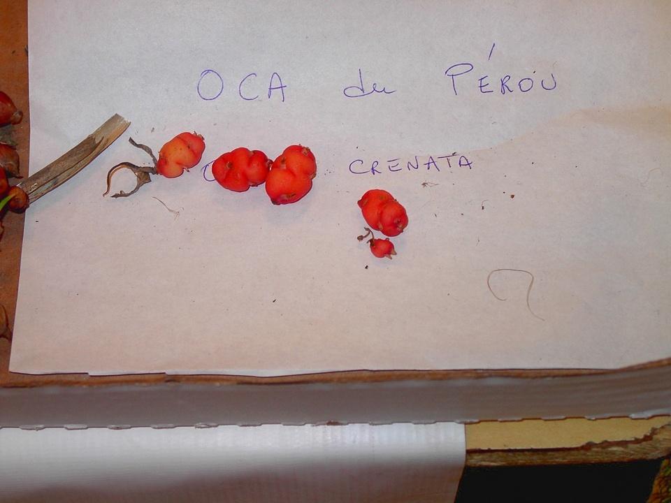 OcaDuPerou
