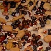 semences-patrimoine_thumb
