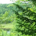 thumb foret-tourbiere s